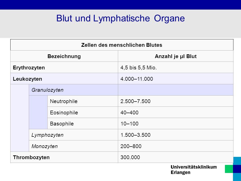 Zellen des menschlichen Blutes BezeichnungAnzahl je μl Blut Erythrozyten4,5 bis 5,5 Mio. Leukozyten4.000–11.000 Granulozyten Neutrophile2.500–7.500 Eo