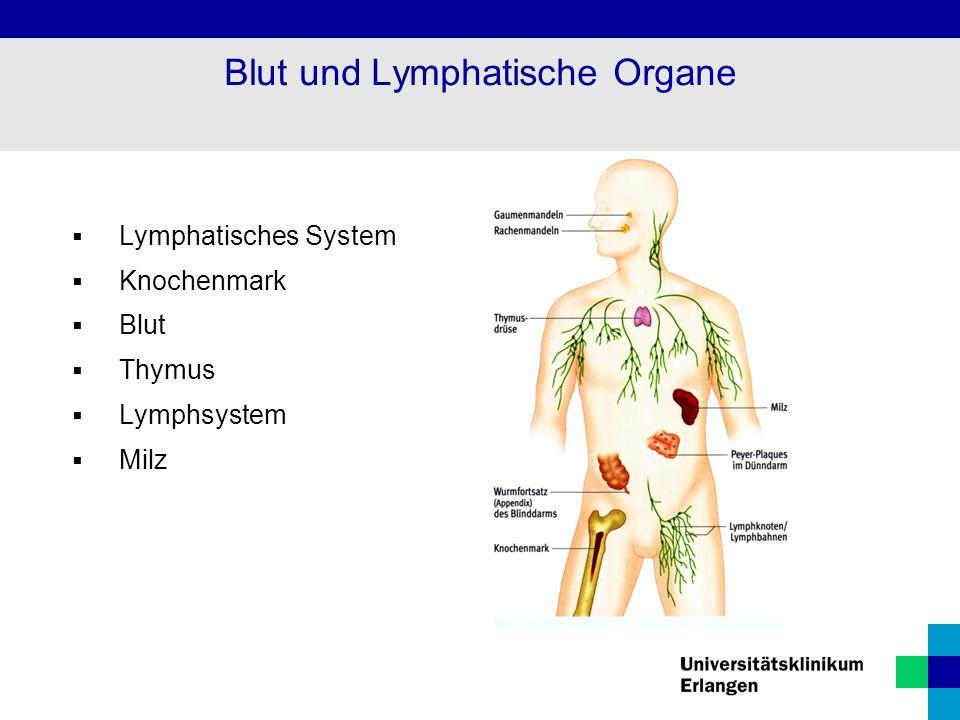  Lymphatisches System  Knochenmark  Blut  Thymus  Lymphsystem  Milz Blut und Lymphatische Organe