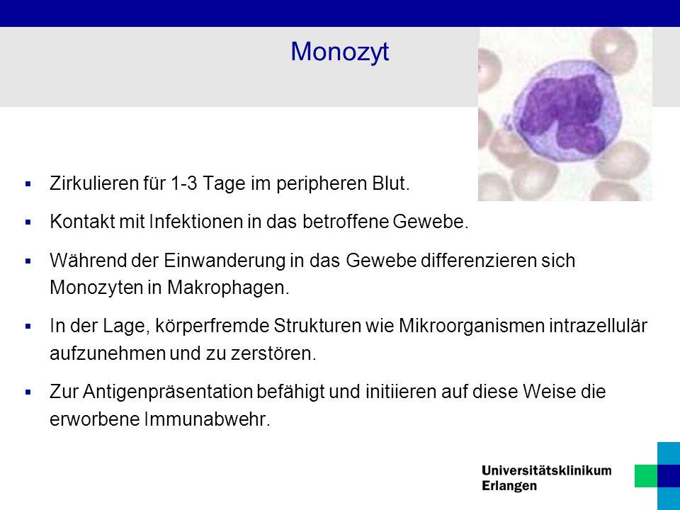 Monozyt  Zirkulieren für 1-3 Tage im peripheren Blut.  Kontakt mit Infektionen in das betroffene Gewebe.  Während der Einwanderung in das Gewebe di