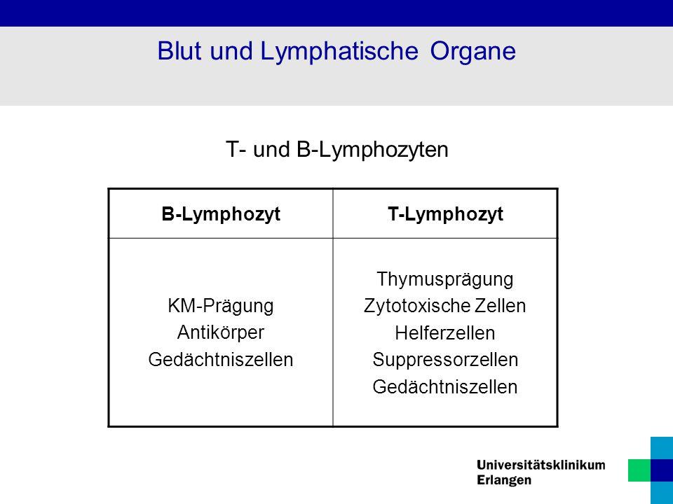 T- und B-Lymphozyten B-LymphozytT-Lymphozyt KM-Prägung Antikörper Gedächtniszellen Thymusprägung Zytotoxische Zellen Helferzellen Suppressorzellen Ged