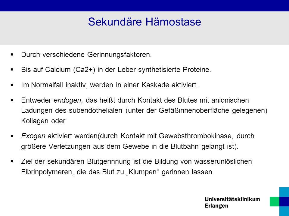 Sekundäre Hämostase  Durch verschiedene Gerinnungsfaktoren.  Bis auf Calcium (Ca2+) in der Leber synthetisierte Proteine.  Im Normalfall inaktiv, w