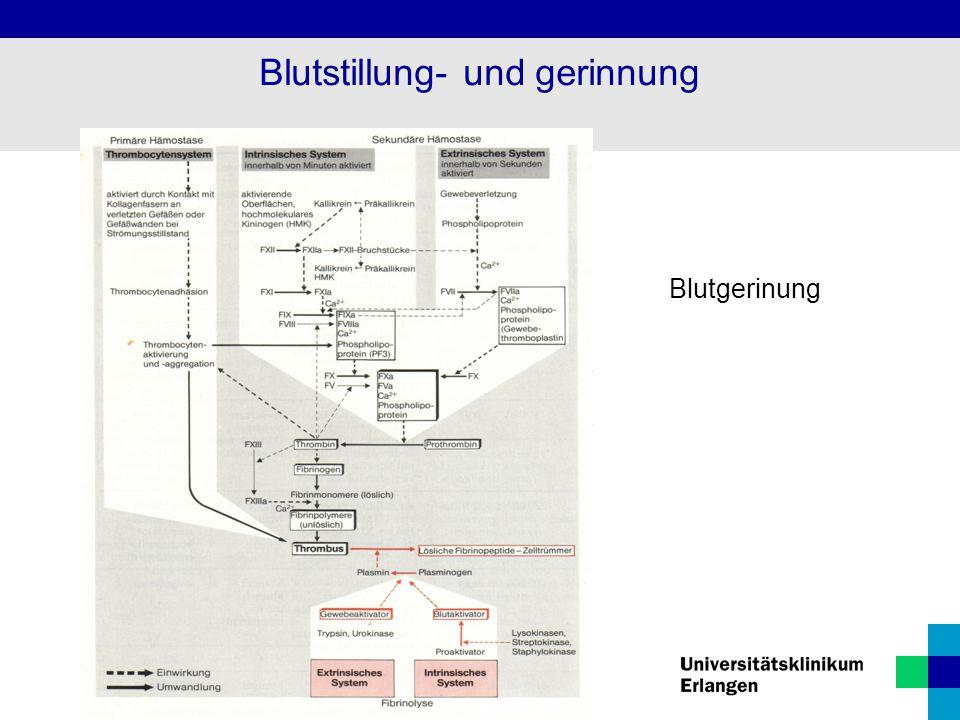 Blutgerinung Blutstillung- und gerinnung