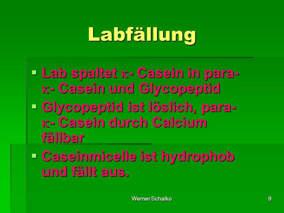 Werner Schalko9 Labfällung  Lab spaltet  - Casein in para-  - Casein und Glycopeptid  Glycopeptid ist löslich, para-  - Casein durch Calcium fällbar  Caseinmicelle ist hydrophob und fällt aus.