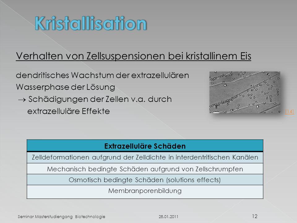 Verhalten von Zellsuspensionen bei kristallinem Eis dendritisches Wachstum der extrazellulären Wasserphase der Lösung  Schädigungen der Zellen v.a.