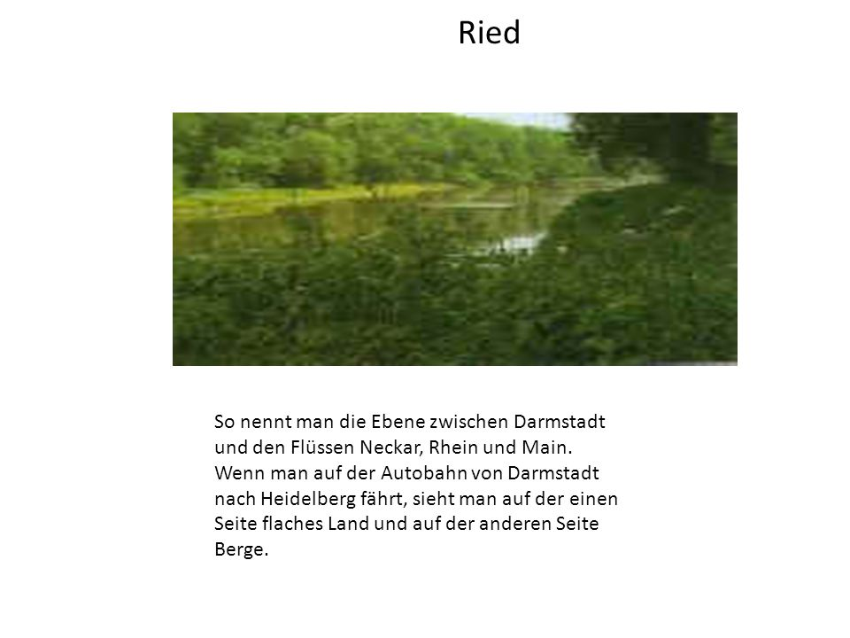 Ried So nennt man die Ebene zwischen Darmstadt und den Flüssen Neckar, Rhein und Main.