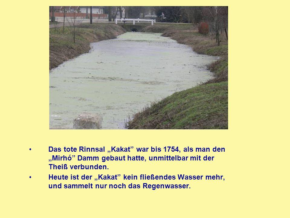 """Das tote Rinnsal """"Kakat"""" war bis 1754, als man den """"Mirhó"""" Damm gebaut hatte, unmittelbar mit der Theiß verbunden. Heute ist der """"Kakat"""" kein fließend"""