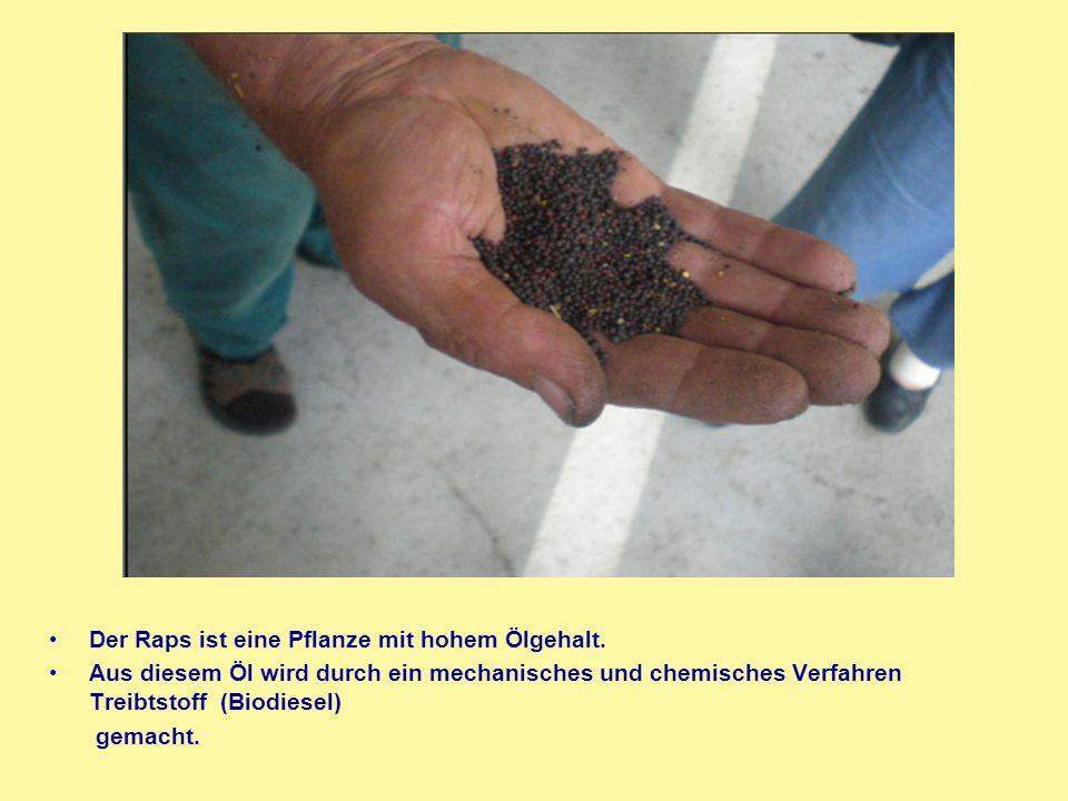 Der Raps ist eine Pflanze mit hohem Ölgehalt. Aus diesem Öl wird durch ein mechanisches und chemisches Verfahren Treibtstoff (Biodiesel) gemacht.