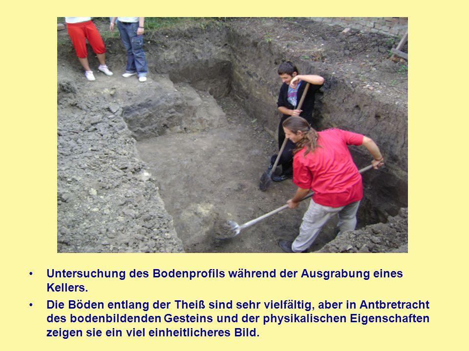 Untersuchung des Bodenprofils während der Ausgrabung eines Kellers. Die Böden entlang der Theiß sind sehr vielfältig, aber in Antbretracht des bodenbi