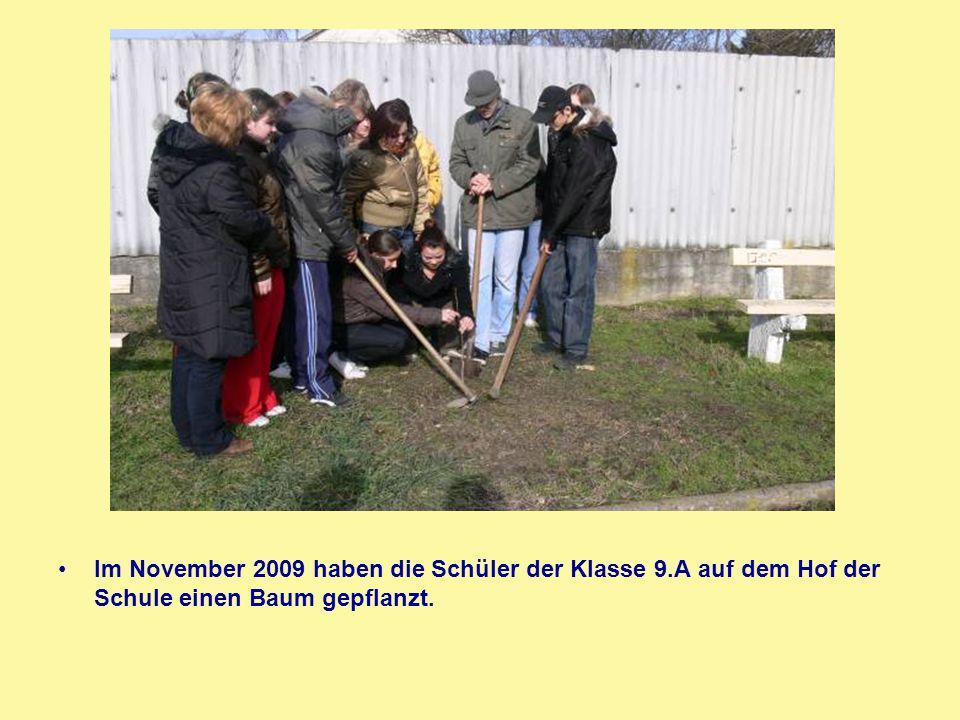 Im November 2009 haben die Schüler der Klasse 9.A auf dem Hof der Schule einen Baum gepflanzt.