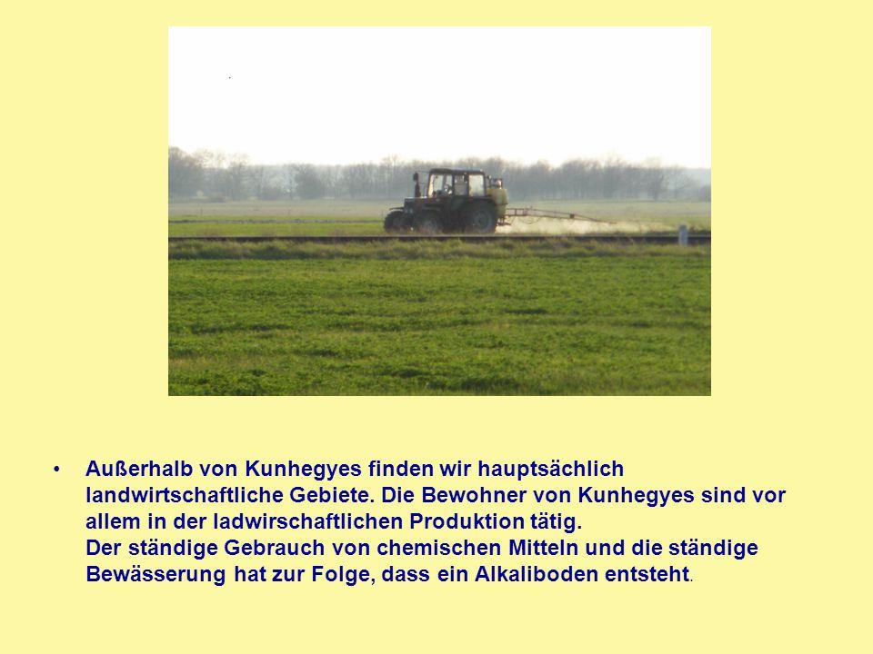 Außerhalb von Kunhegyes finden wir hauptsächlich landwirtschaftliche Gebiete. Die Bewohner von Kunhegyes sind vor allem in der ladwirschaftlichen Prod