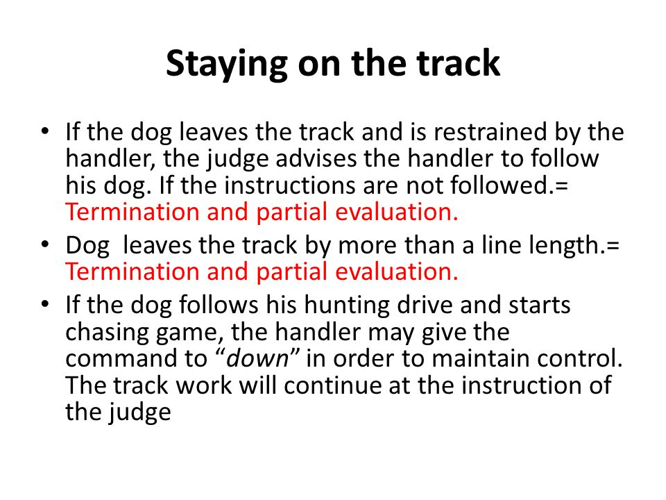 Staying on the track If the dog leaves the track and is restrained by the handler, the judge advises the handler to follow his dog.