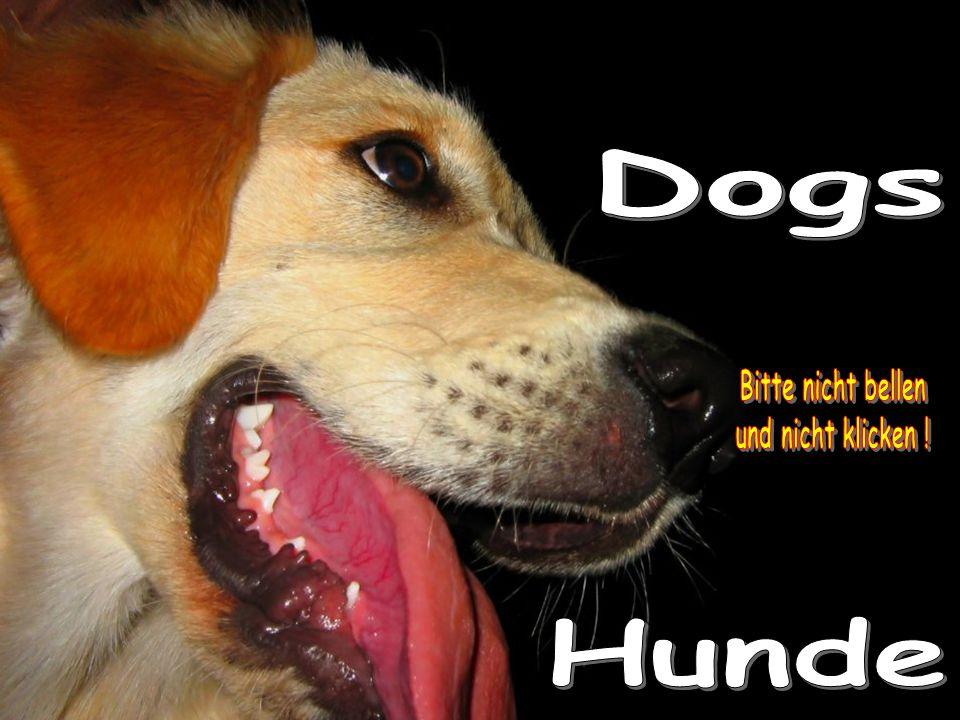 """Just thinking that my dog loves me more than I love him, I feel shame. (Konrad Lorenz) """"Allein der Gedanke, dass mein Hund mich mehr liebt als ich ihn liebe, beschämt mich. (Konrad Lorenz) """"Allein der Gedanke, dass mein Hund mich mehr liebt als ich ihn liebe, beschämt mich. (Konrad Lorenz)"""