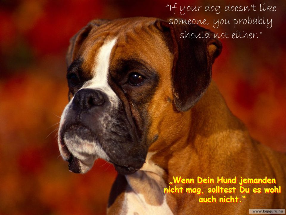 """Who said you can not buy happiness, when you are thinking about puppies"" (Gene Hill) ""Wer sagt, Du kannst Glück nicht kaufen, wenn Du über Welpen nac"