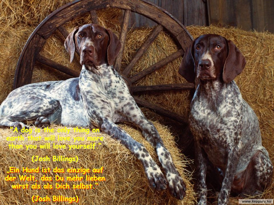 "If your dog doesn t like someone, you probably should not either. ""Wenn Dein Hund jemanden nicht mag, solltest Du es wohl auch nicht."
