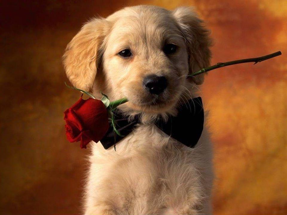 """It is shameful for our species being the dog, (man s best friend) when the man is the dog's worst friend. (Eduardo Lamazón) Es ist für unsere Art beschämend gegenüber dem Hund, (dem besten Freund des Menschen) wenn der Mensch der schlechteste Freund des Hundes ist."""" (Eduardo Lamazón Es ist für unsere Art beschämend gegenüber dem Hund, (dem besten Freund des Menschen) wenn der Mensch der schlechteste Freund des Hundes ist."""" (Eduardo Lamazón"""