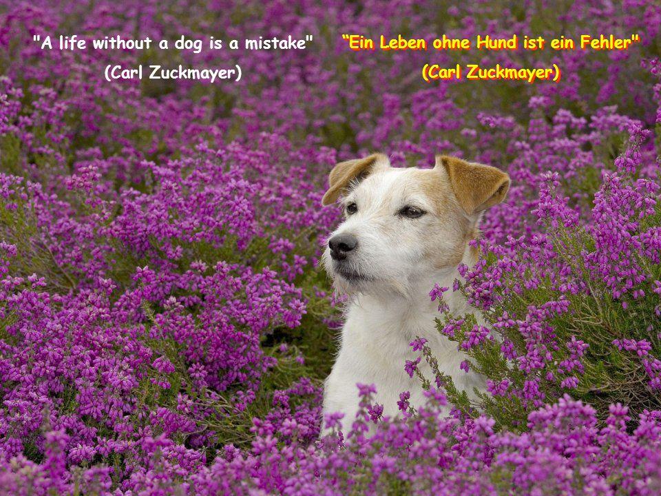 A life without a dog is a mistake (Carl Zuckmayer) Ein Leben ohne Hund ist ein Fehler (Carl Zuckmayer) Ein Leben ohne Hund ist ein Fehler (Carl Zuckmayer)