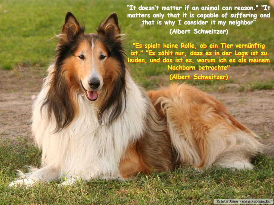 It doesn't matter if an animal can reason. It matters only that it is capable of suffering and that is why I consider it my neighbor (Albert Schweitzer) Es spielt keine Rolle, ob ein Tier vernünftig ist. Es zählt nur, dass es in der Lage ist zu leiden, und das ist es, warum ich es als meinem Nachbarn betrachte (Albert Schweitzer)