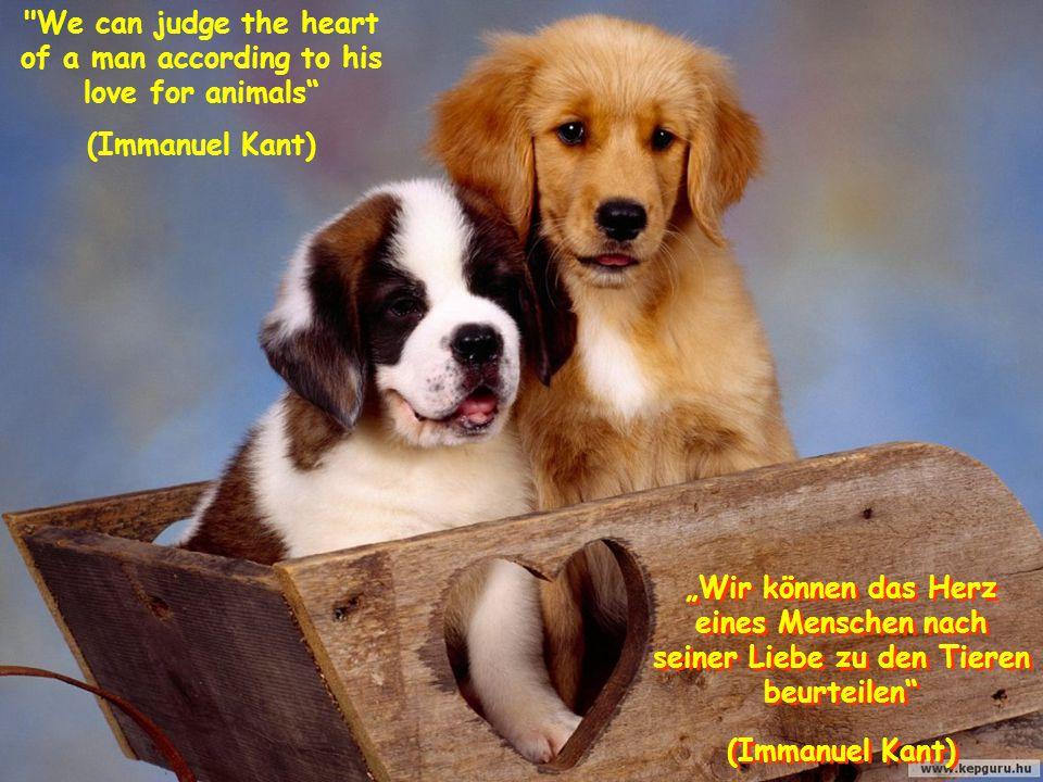 """We can judge the heart of a man according to his love for animals (Immanuel Kant) """"Wir können das Herz eines Menschen nach seiner Liebe zu den Tieren beurteilen (Immanuel Kant) """"Wir können das Herz eines Menschen nach seiner Liebe zu den Tieren beurteilen (Immanuel Kant)"""