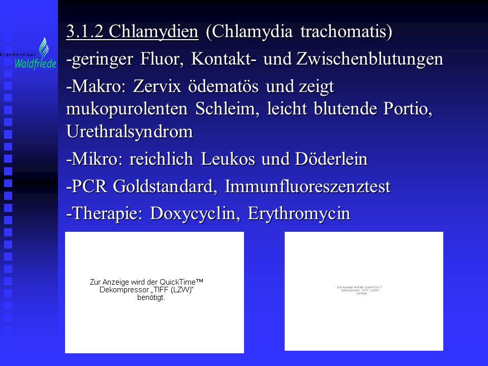 3.1.2 Chlamydien (Chlamydia trachomatis) -geringer Fluor, Kontakt- und Zwischenblutungen -Makro: Zervix ödematös und zeigt mukopurolenten Schleim, lei
