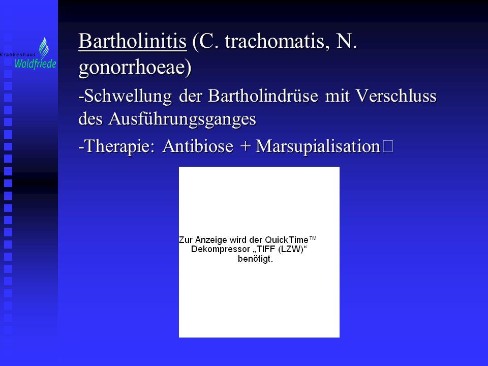 Bartholinitis (C. trachomatis, N. gonorrhoeae) -Schwellung der Bartholindrüse mit Verschluss des Ausführungsganges -Therapie: Antibiose + Marsupialisa
