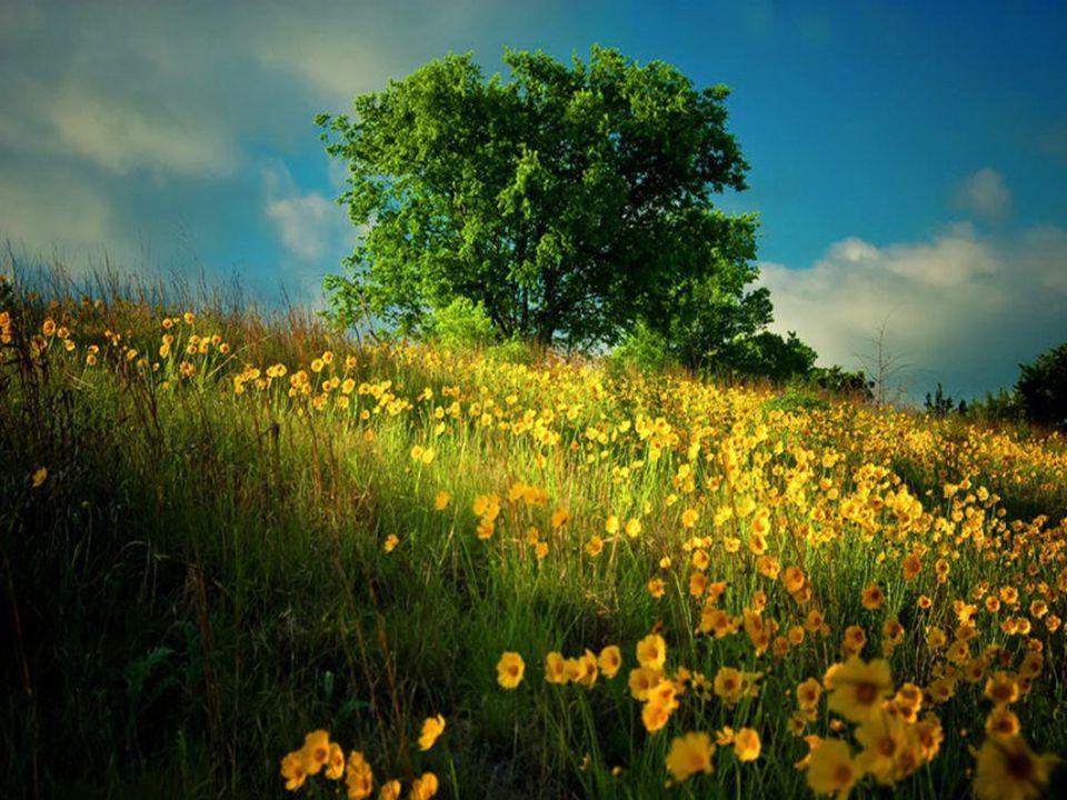 Ein Baum, der dir Schatten spendet und unter dessen sanft rauschenden Blättern du zu neuen Kraftquellen hinfindest.