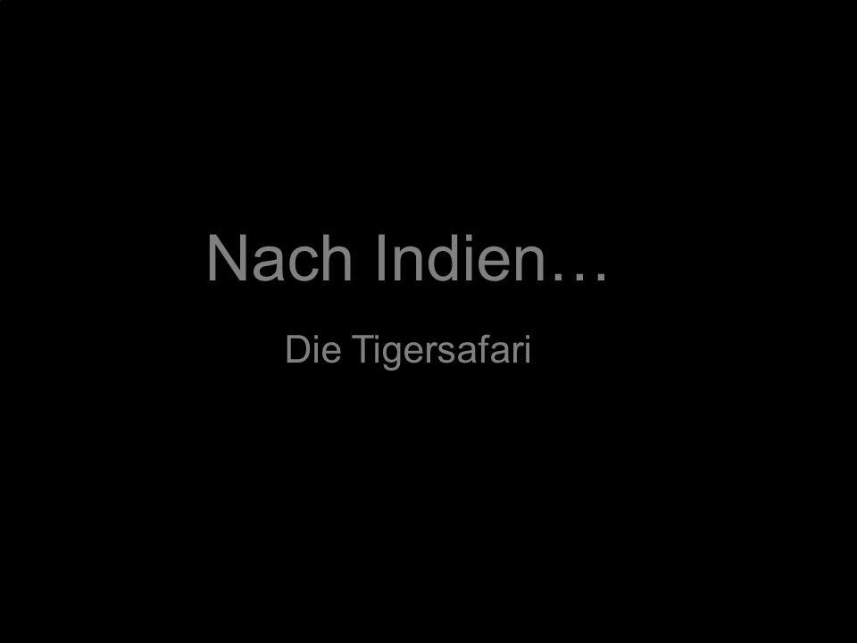 Nach Indien… Die Tigersafari