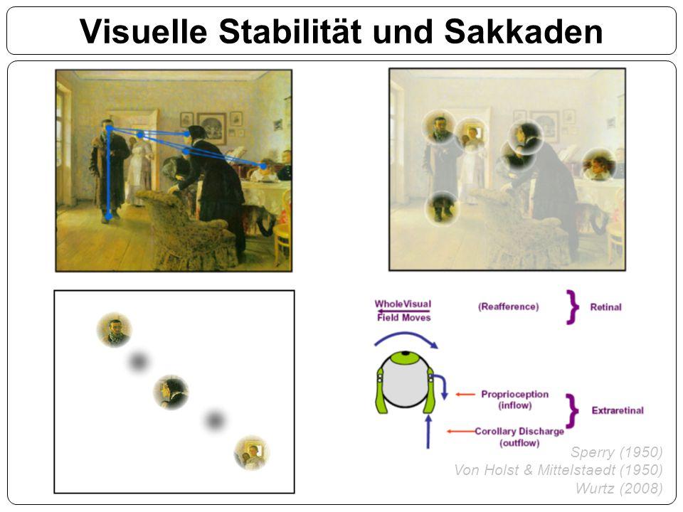 Visuelle Stabilität und Sakkaden Sperry (1950) Von Holst & Mittelstaedt (1950) Wurtz (2008)