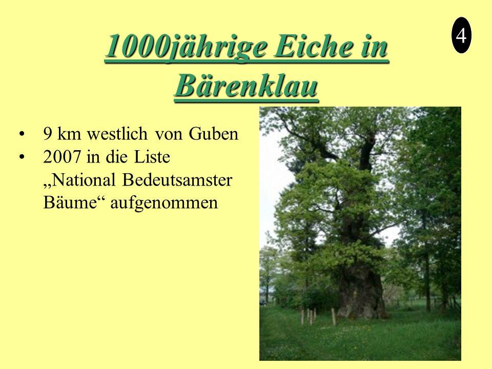 """1000jährige Eiche in Bärenklau 4 9 km westlich von Guben 2007 in die Liste """"National Bedeutsamster Bäume aufgenommen"""