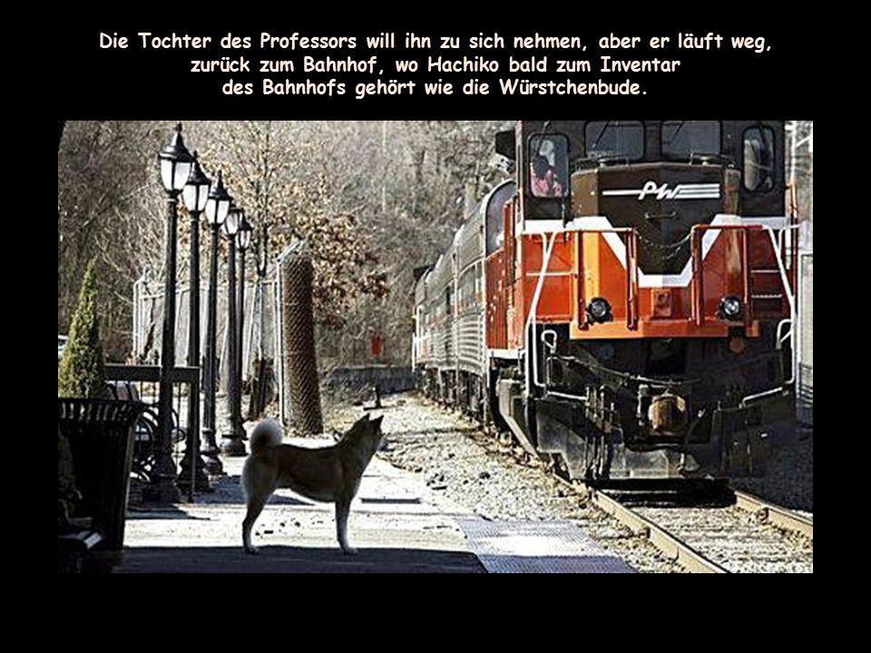 Wie ein Denkmal sitzt der Hund vor dem Bahnhof, Tag für Tag, Woche für Woche, Monat für Monat, Jahr für Jahr.