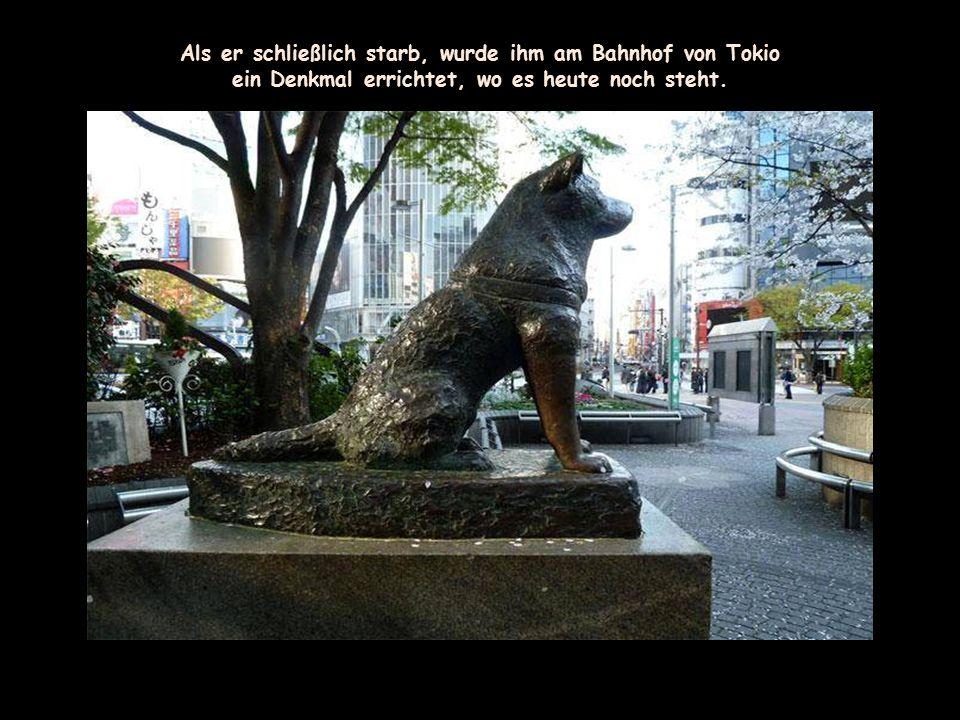Hachiko starb im Alter von 12 Jahren an Filariose.