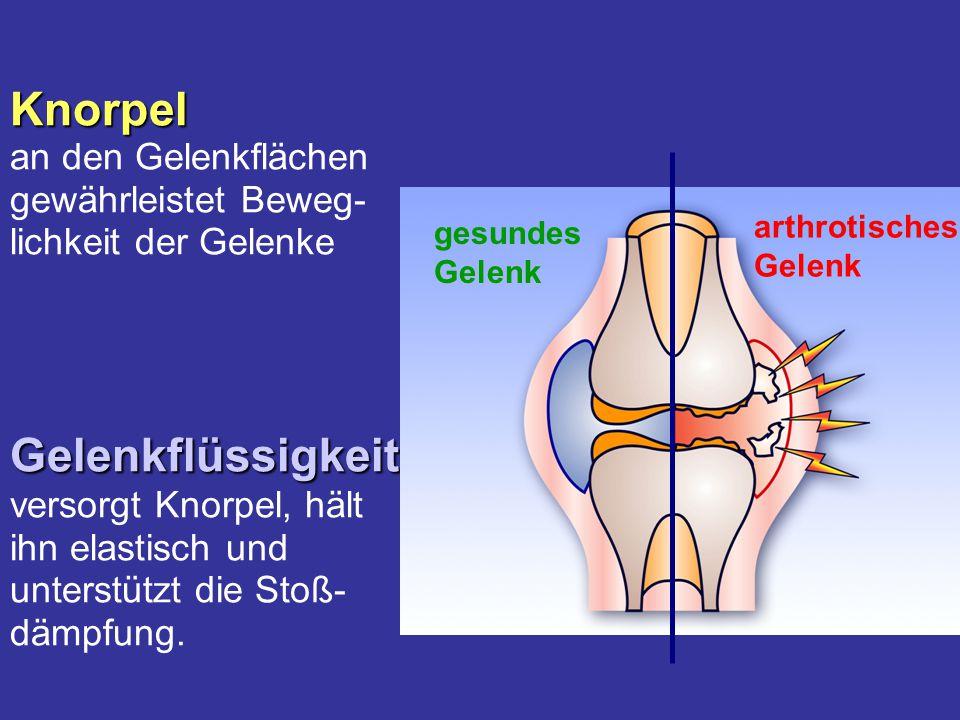 Knorpel an den Gelenkflächen gewährleistet Beweg- lichkeit der Gelenke Gelenkflüssigkeit versorgt Knorpel, hält ihn elastisch und unterstützt die Stoß