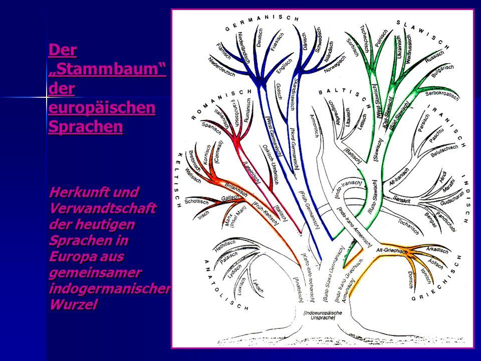 """Der """"Stammbaum der europäischen Sprachen Herkunft und Verwandtschaft der heutigen Sprachen in Europa aus gemeinsamer indogermanischer Wurzel"""
