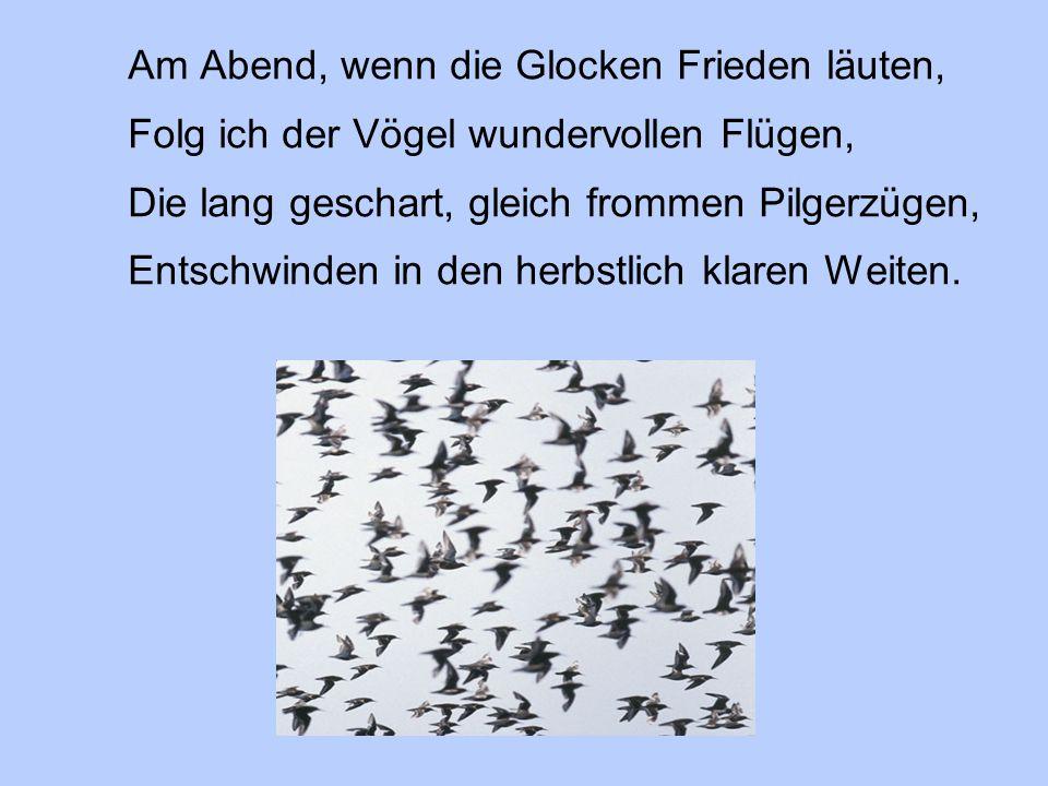 Am Abend, wenn die Glocken Frieden läuten, Folg ich der Vögel wundervollen Flügen, Die lang geschart, gleich frommen Pilgerzügen, Entschwinden in den herbstlich klaren Weiten.