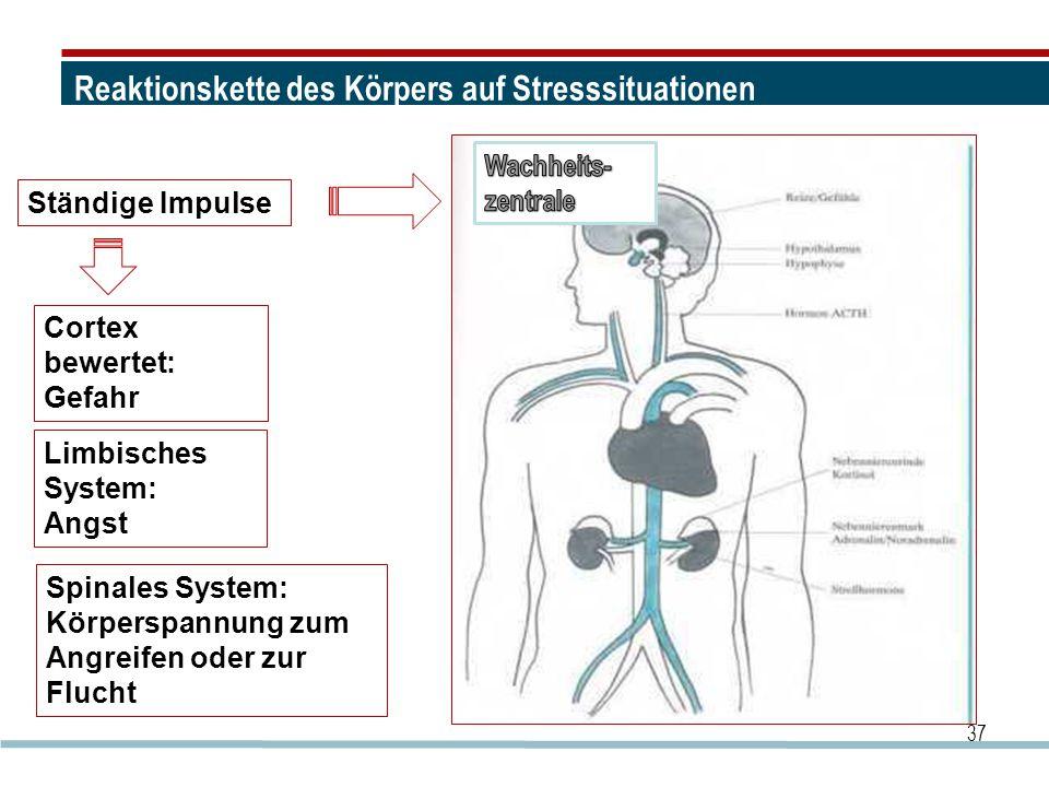 Reaktionskette des Körpers auf Stresssituationen 37 Ständige Impulse Cortex bewertet: Gefahr Limbisches System: Angst Spinales System: Körperspannung