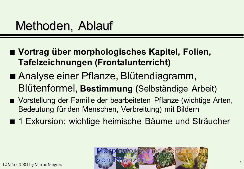 12 März, 2001 by Martin Magnes 3 n Vortrag über morphologisches Kapitel, Folien, Tafelzeichnungen (Frontalunterricht) n Analyse einer Pflanze, Blütend