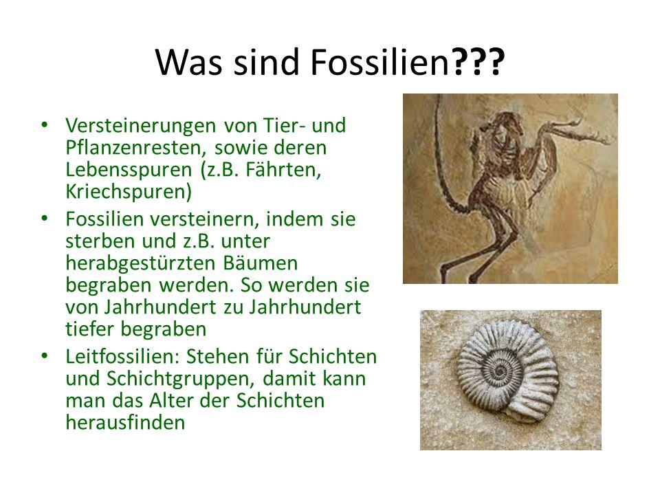 Fossilien-AG???? Was ist das????