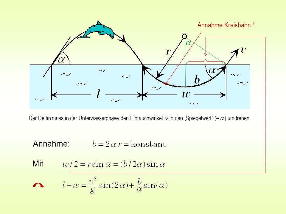 """Annahme: Mit Annahme Kreisbahn ! Der Delfin muss in der Unterwasserphase den Eintauchwinkel  in den """"Spiegelwert"""" (    ) umdrehen. """