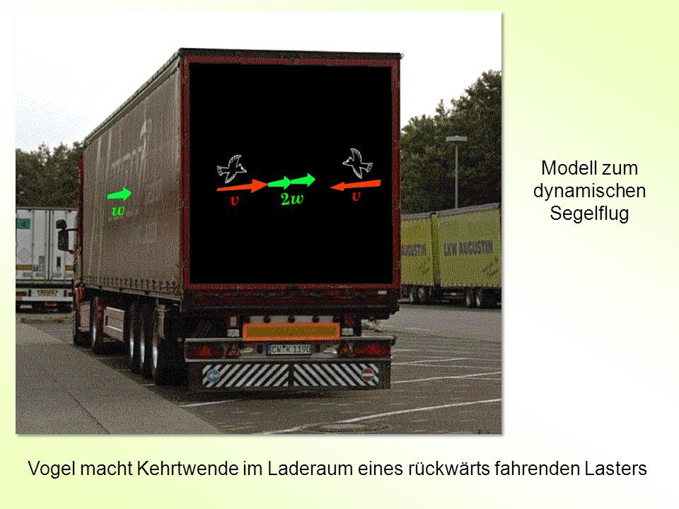 v v w 2w2w Vogel macht Kehrtwende im Laderaum eines rückwärts fahrenden Lasters Modell zum dynamischen Segelflug