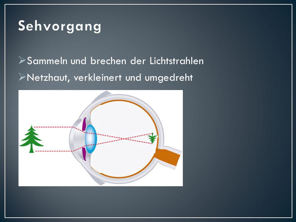 Das Loch wird durch die Iris gebildet und die Netzhaut stellt den Schirm dar.