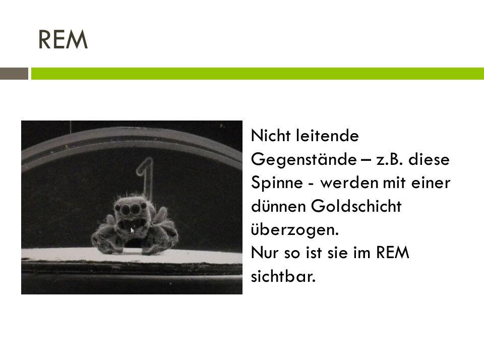 REM Nicht leitende Gegenstände – z.B. diese Spinne - werden mit einer dünnen Goldschicht überzogen. Nur so ist sie im REM sichtbar.