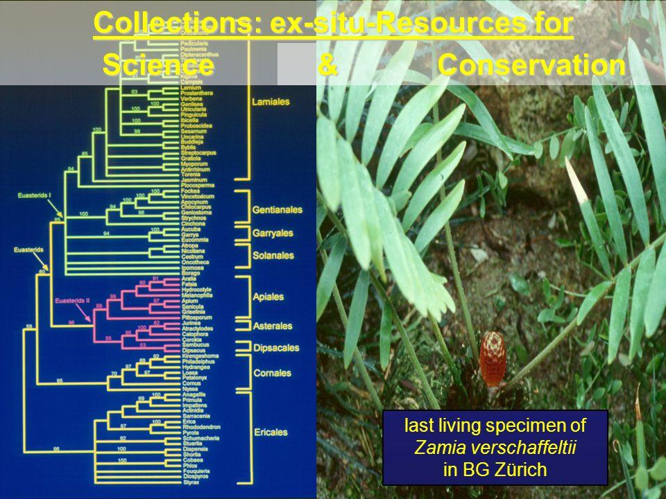 Diversity of Taxonomic Collections Orchidaceae Bromeliaceae (19) Ericaceae (17) Cactaceae (15) Begoniaceae (9)Cycadopsida (11)Crassulaceae (9)Geraniaceae (9)Onagraceae (8)Rosaceae (8)Araceae (7)Asphodelaceae (7)Salicaceae (7)Piperaceae (5) Theaceae (5) (30)
