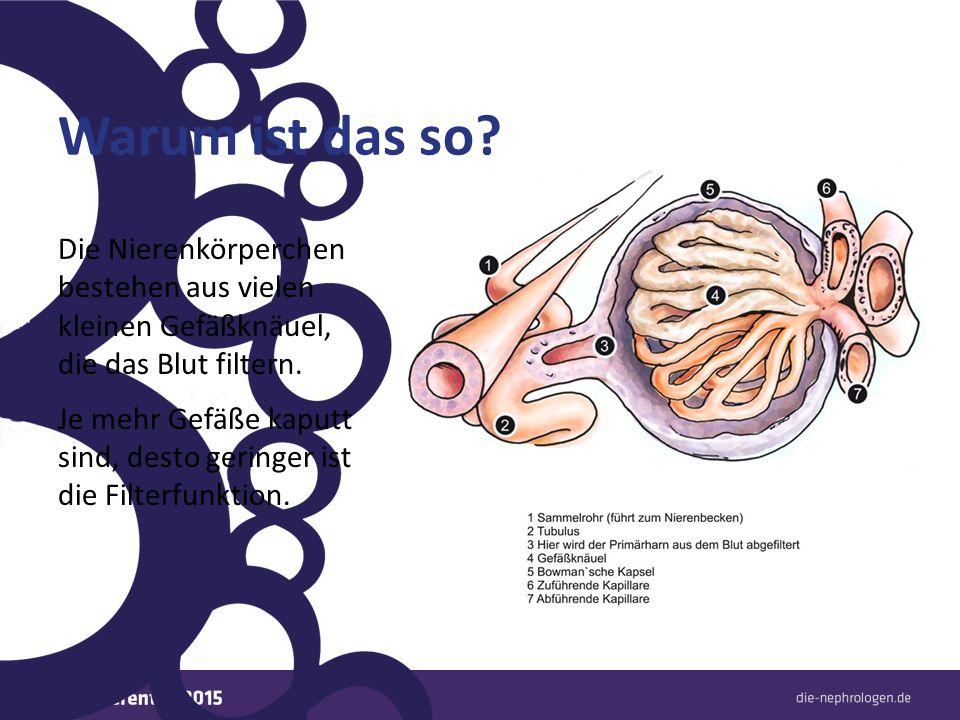Warum ist das so? Die Nierenkörperchen bestehen aus vielen kleinen Gefäßknäuel, die das Blut filtern. Je mehr Gefäße kaputt sind, desto geringer ist d