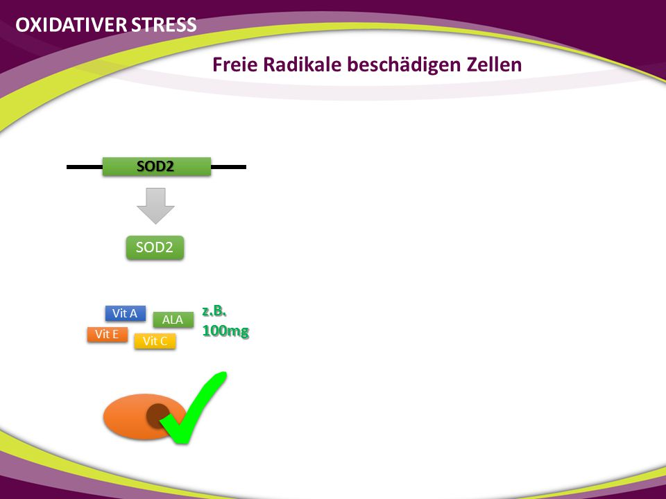 SOD2 SOD2 Vit C Vit E ALA Vit A z.B.100mg OXIDATIVER STRESS Freie Radikale beschädigen Zellen