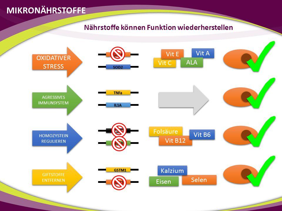 GPX1 SOD2 TNFa IL1A MTHFR MTRR GSTM1 GSTT1 Vit C Vit E Vit A ALA Folsäure Vit B12 Vit B6 Selen Kalzium Eisen MIKRONÄHRSTOFFE Nährstoffe können Funktio