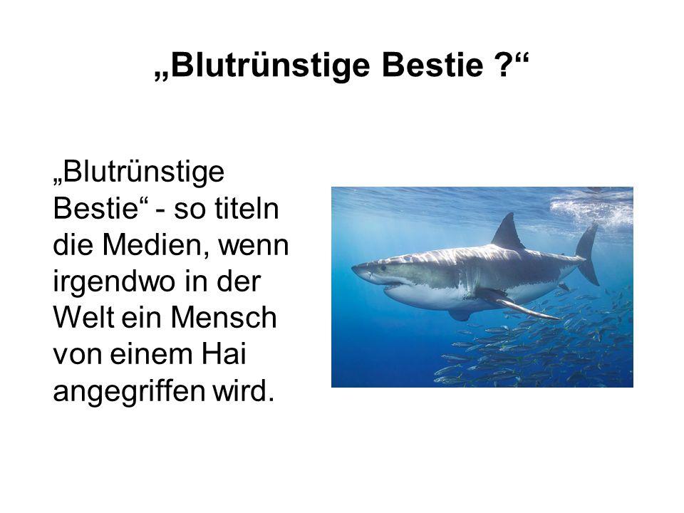 """""""Blutrünstige Bestie ?"""" """"Blutrünstige Bestie"""" - so titeln die Medien, wenn irgendwo in der Welt ein Mensch von einem Hai angegriffen wird."""