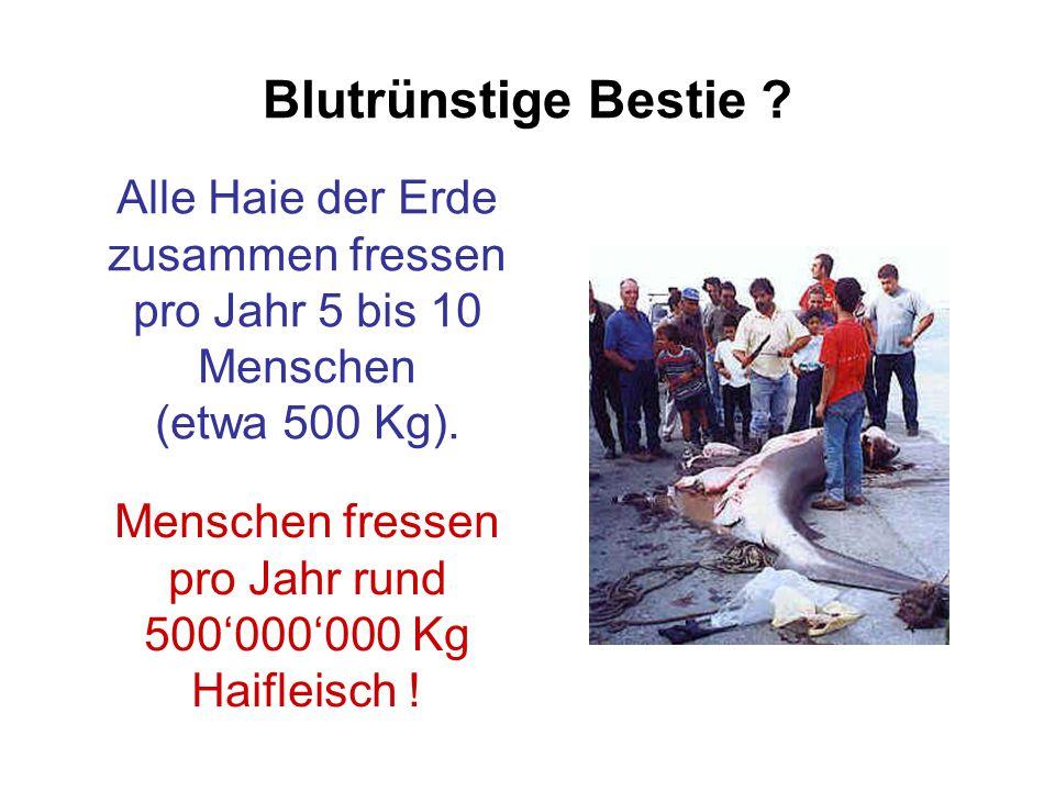 Blutrünstige Bestie ? Alle Haie der Erde zusammen fressen pro Jahr 5 bis 10 Menschen (etwa 500 Kg). Menschen fressen pro Jahr rund 500'000'000 Kg Haif