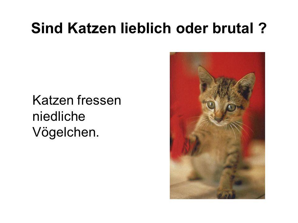 Sind Katzen lieblich oder brutal ? Katzen fressen niedliche Vögelchen.