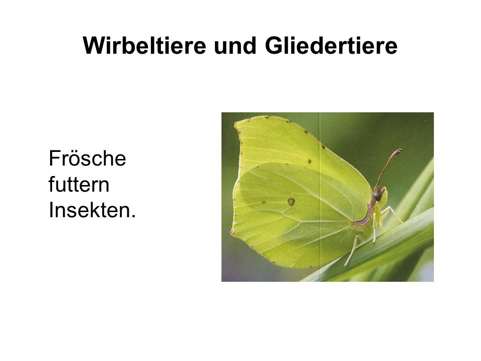 Wirbeltiere und Gliedertiere Frösche futtern Insekten.