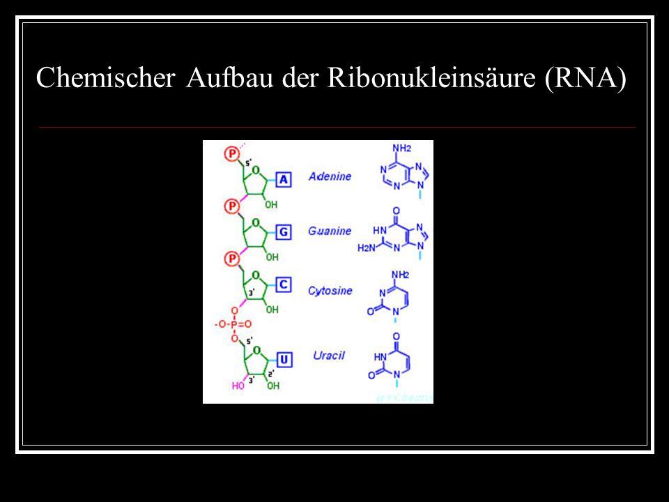 Chemischer Aufbau der Ribonukleinsäure (RNA)
