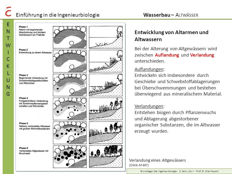 Einführung in die IngenieurbiologieWasserbau – A LTWÄSSER ENTWICKLUNGENTWICKLUNG Grundlagen der Ingenieurbiologie - 3. Sem. LAU – Prof. Dr. Ellen Kaus